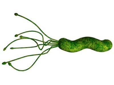 幽门螺旋杆菌药物治疗