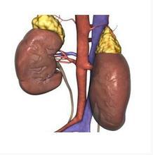 肾炎是一种什么样的疾病?