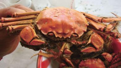 """螃蟹怎么吃?健康吃蟹要做到""""三除"""""""