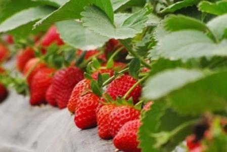 晚上吃水果好吗?