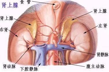尿道先天性发育异常